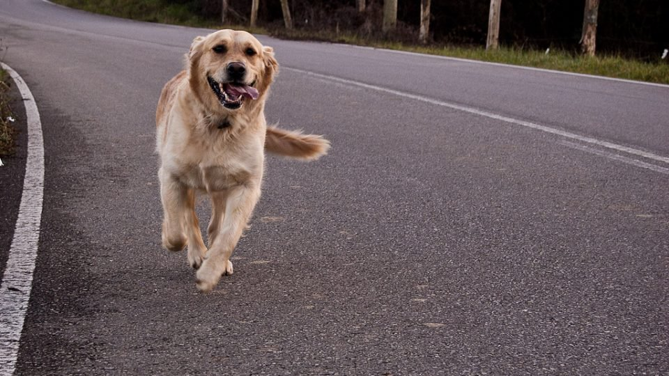 5 Frighteningly mon Reasons Dogs Run Away