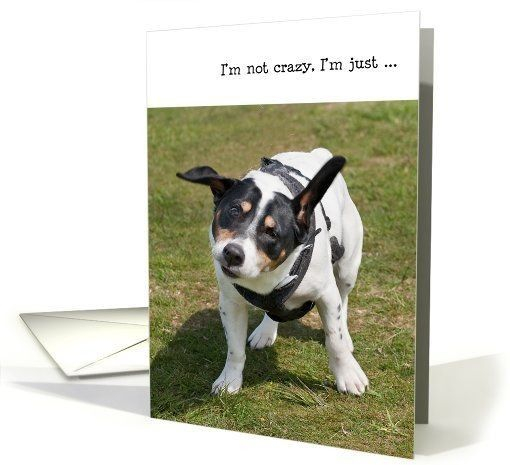 Funny Dog Birthday Cards Lovely Humorous Birthday Card Funny Dog Card