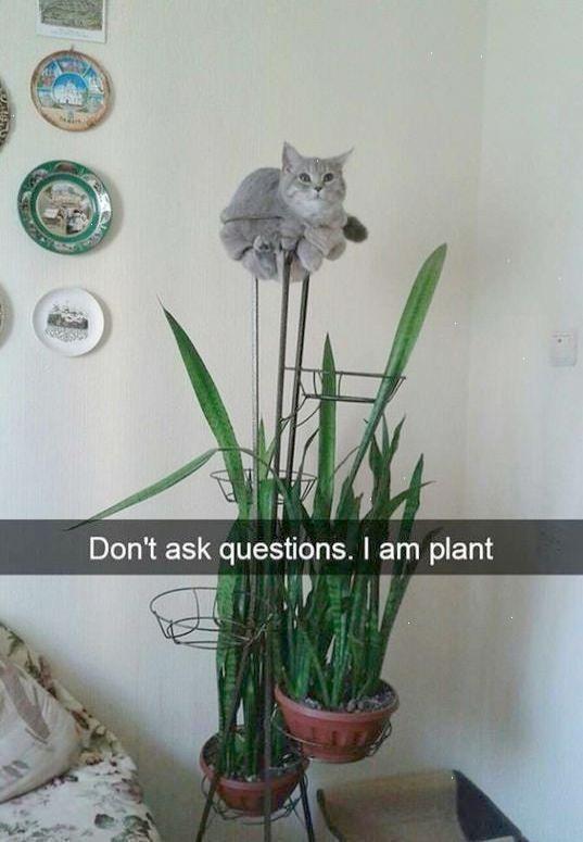 Cute Cats Memes
