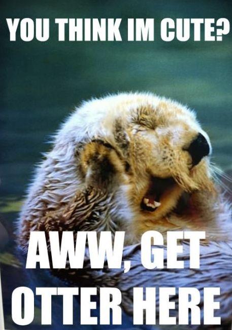you think I m cute aww otter here hehe funny