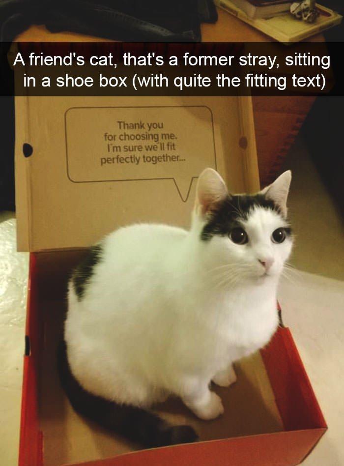 4 Funny cat snapchats
