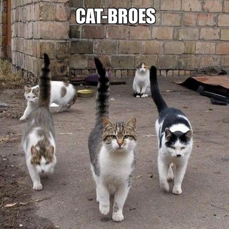 Free Funny Cats Video screenshot 6