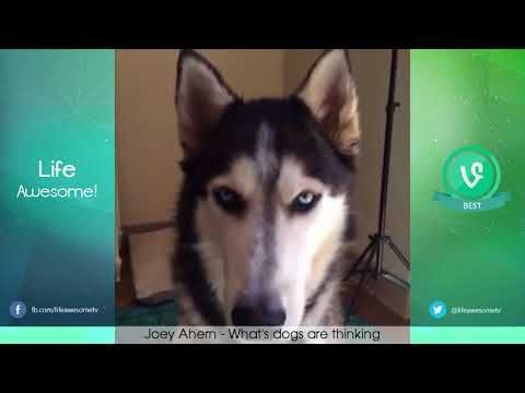 105 TRY NOT TO LAUGH OR GRIN Funny Cat Dog pilation OCTOBER NOVEMBER 2017
