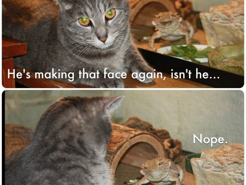 Funny Cat 228