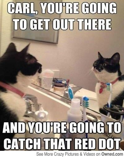 Self motivation level Cat Funny Cats Funny Cat Memes Funny Animals Cute
