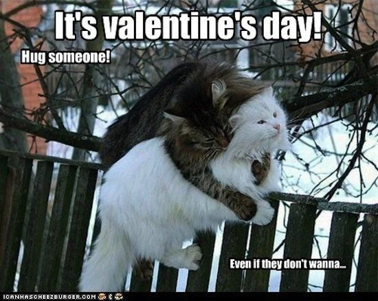 20 Cute and Funny Valentine s Day Memes