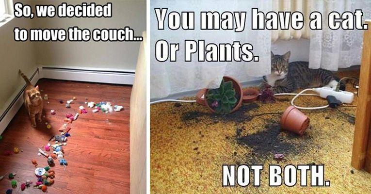 cat owner ft