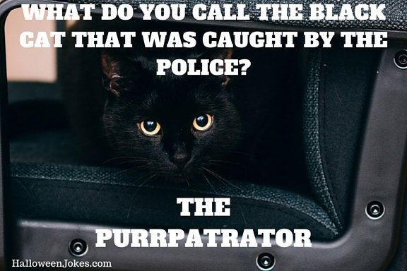 Halloween Joke Black cat Meme 2 – What do you call the black cat that was caught by the police