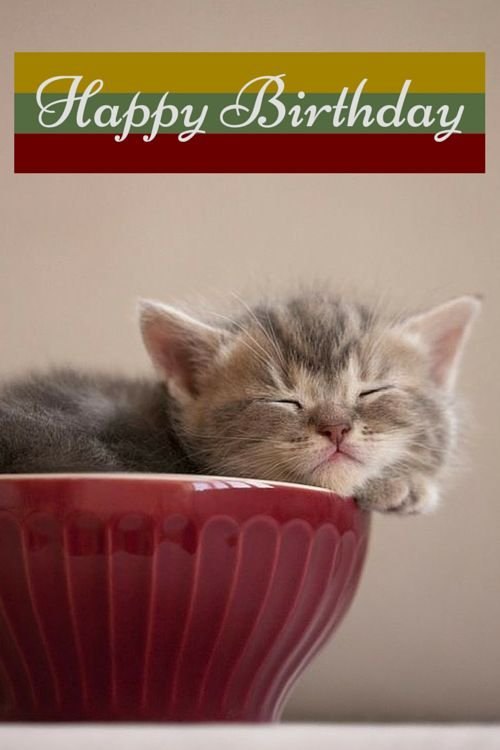 Aacdfbdfabdfde Birthday Card Quotes Birthday Wishes Cards Vintage Funny Cat Birthday Cards