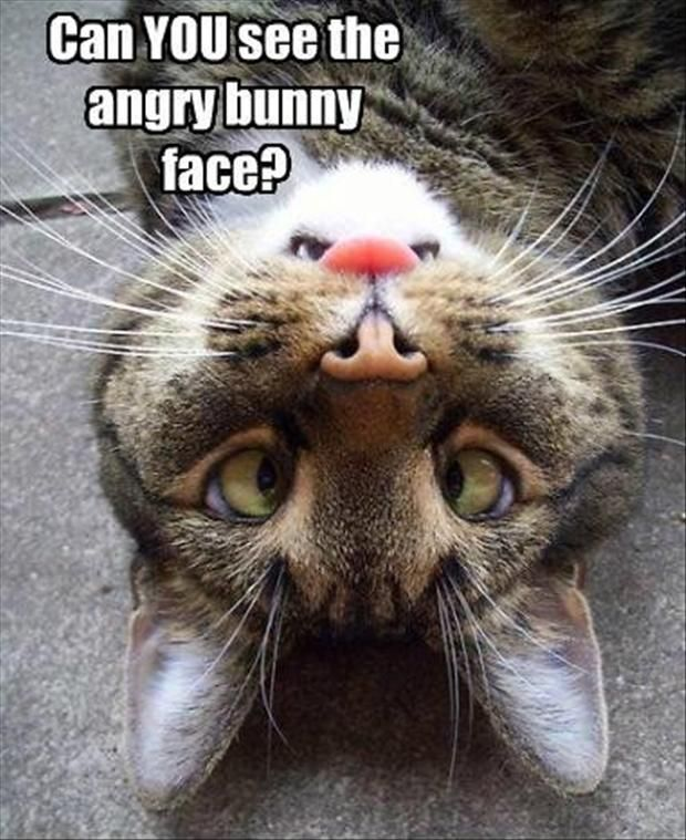 funny angry bunny cat faces Dump A Day