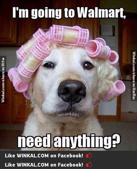 Curlers Clean Animal Memes Funny Animal Jokes Funny Animals With