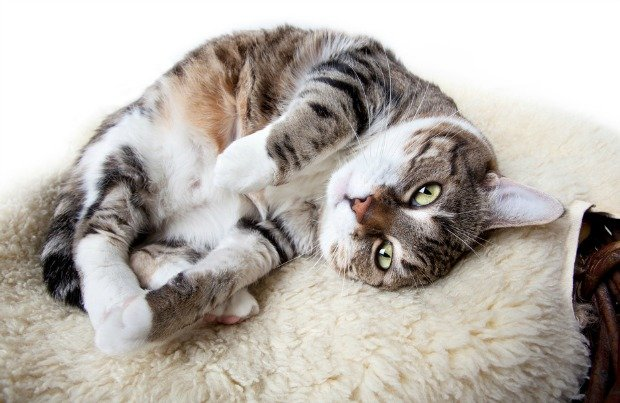 weird cat behavior 1