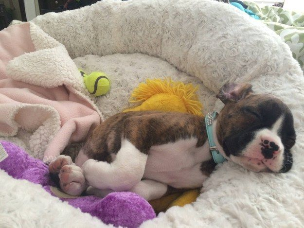 42 That Will Restore Your Faith In Cute