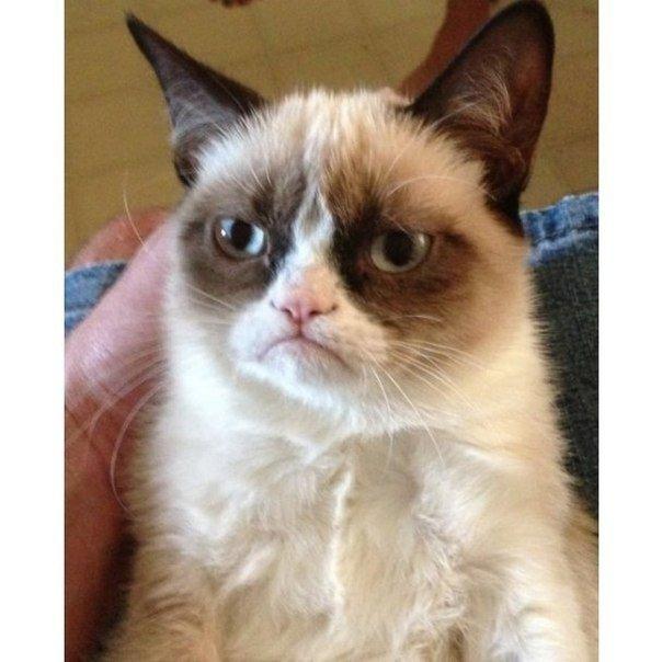 """Create meme """"grumpy cat meme tard the grumpy cat grumpy cat memes"""""""