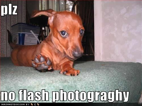 Funny dog pictures with captions and funny dog picture