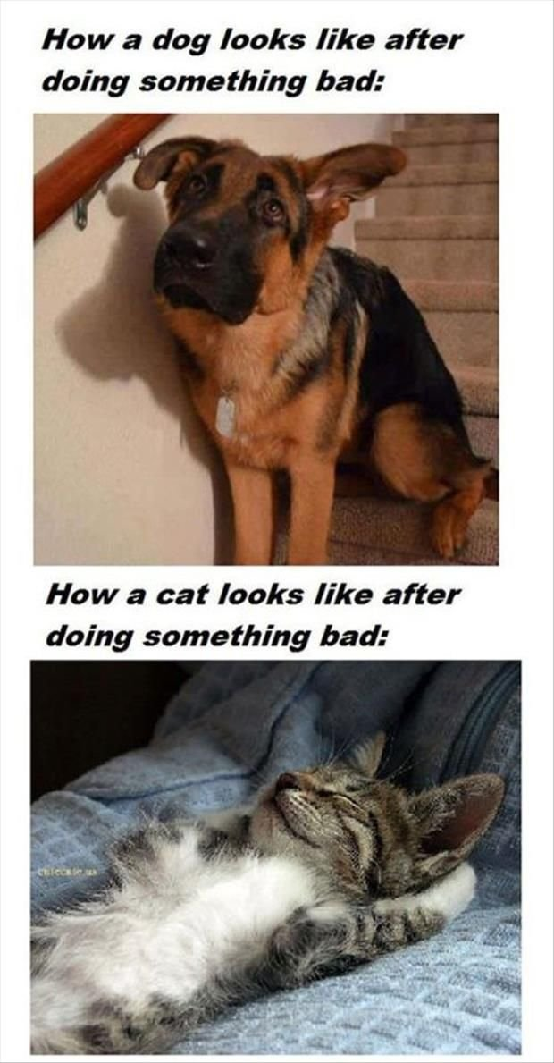 Dogs feel so bad but cats feel so proud of themselves