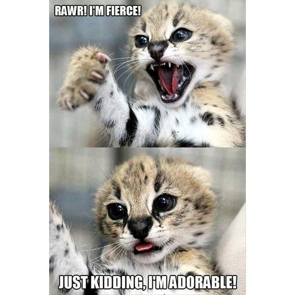 Toothless Cute Animal Quotes Funny Animal Jokes Funny Puppy Memes Cute Dog Quotes