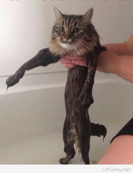 Cat Bath time