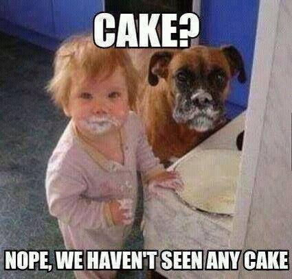 Cake funny baby and dog meme