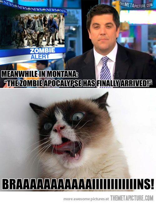 Zombie Grumpy Cat…