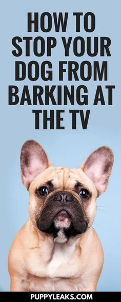 Does your dog bark at the TV Do they riled up anytime they see