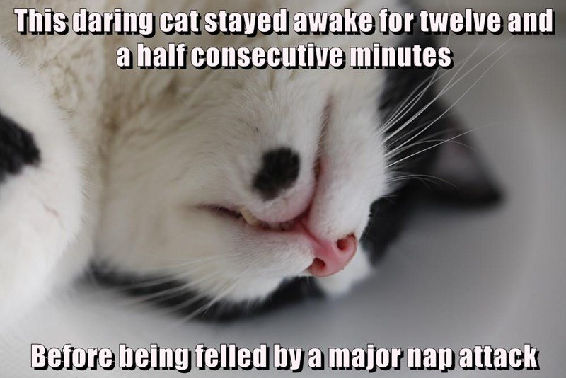 Funny cat meme about a new world record being made for how long a cat was