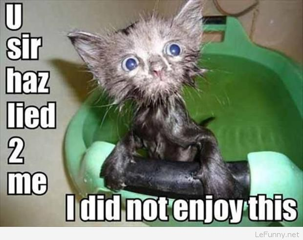 Funny wet cat picture she s not happy at all