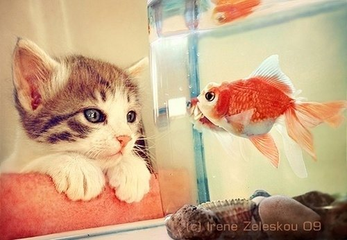beautiful cat cute fish funny life lovely orange sweet water