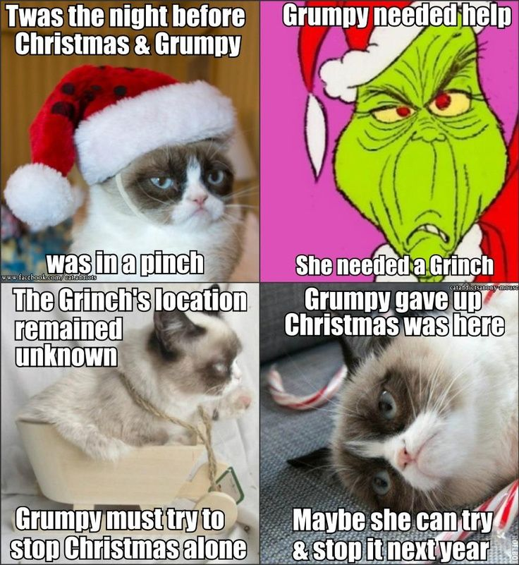 Funny Cat Christmas Memes