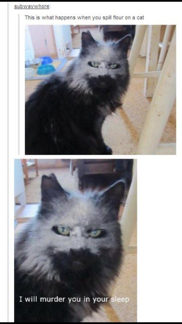 21 Times Tumblr Told The Truth About Cats And this is why I LOVE cats So funny