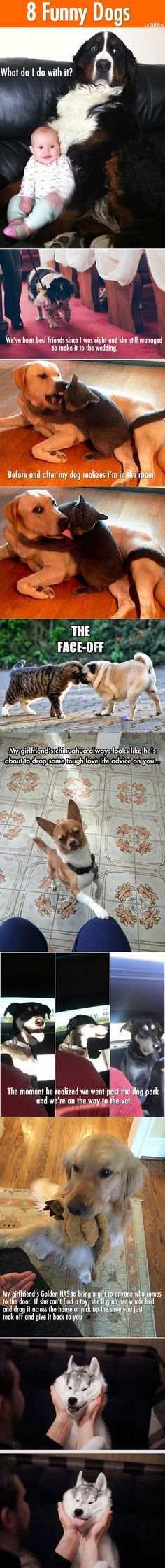 Funny and Awesome pictures Funny Husky