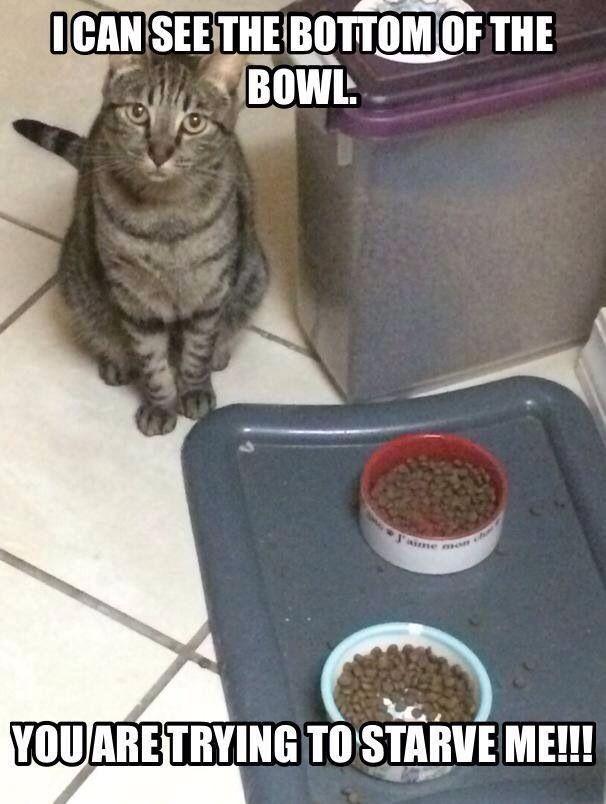 Cat Memes Hilarious Funny Cat Quotes Funny Food Memes Funny Cat Pics