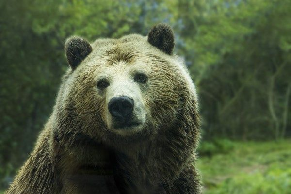 In 2012 a bear who had been refusing food for ten days finally starved herself to according to reports Animal rights campaigners claim that they
