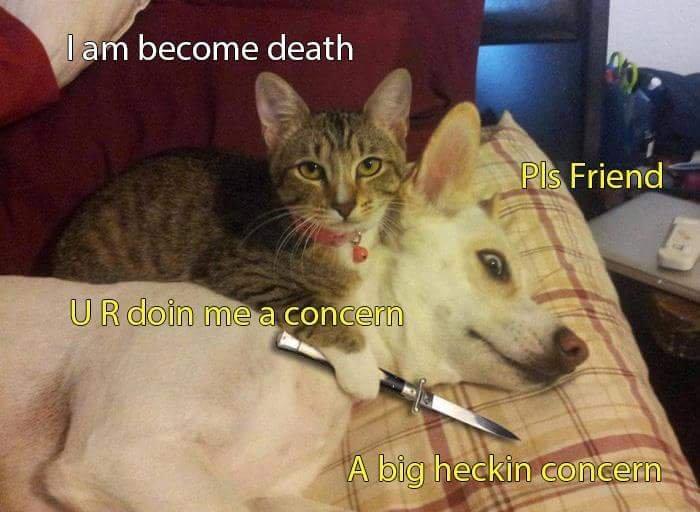 hitman kitty