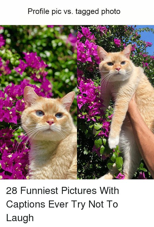 Tagged and Profile pic vs tagged photo 28 Funniest 28 Funniest With Captions Ever Try Not To Laugh
