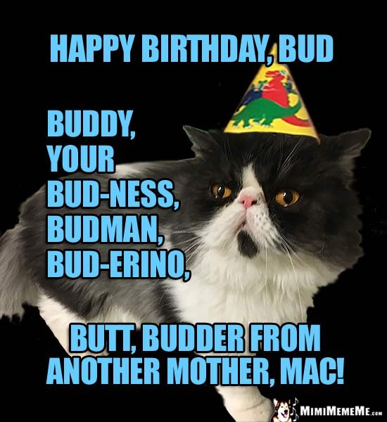 Birthday Cat Happy Birthday Bud buddy budman budder from another