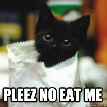 pleez no eat me pleez no eat me Scared Cat