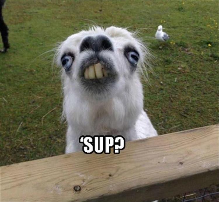 Grasp the Awesome Pictures Of Funny Animal Memes