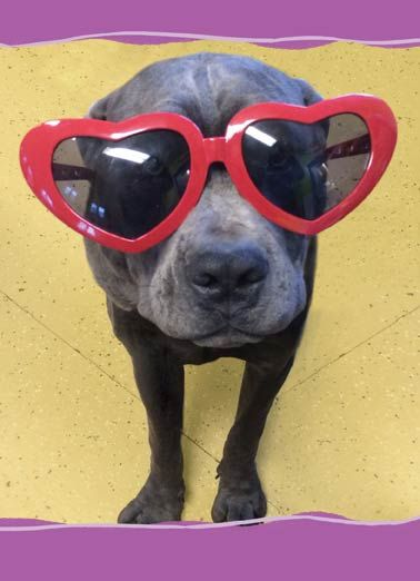 Look At It Funny Valentine s Day Card Dog in sun glasses on a valentine s day greeting