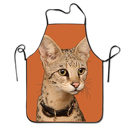 Funny Cat The Savannah Cat Cute Animals Kitchen