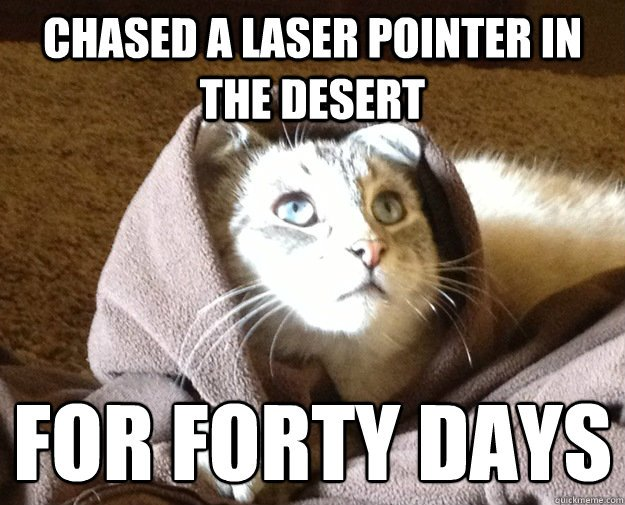 Chased a laser pointer in the desert for forty days