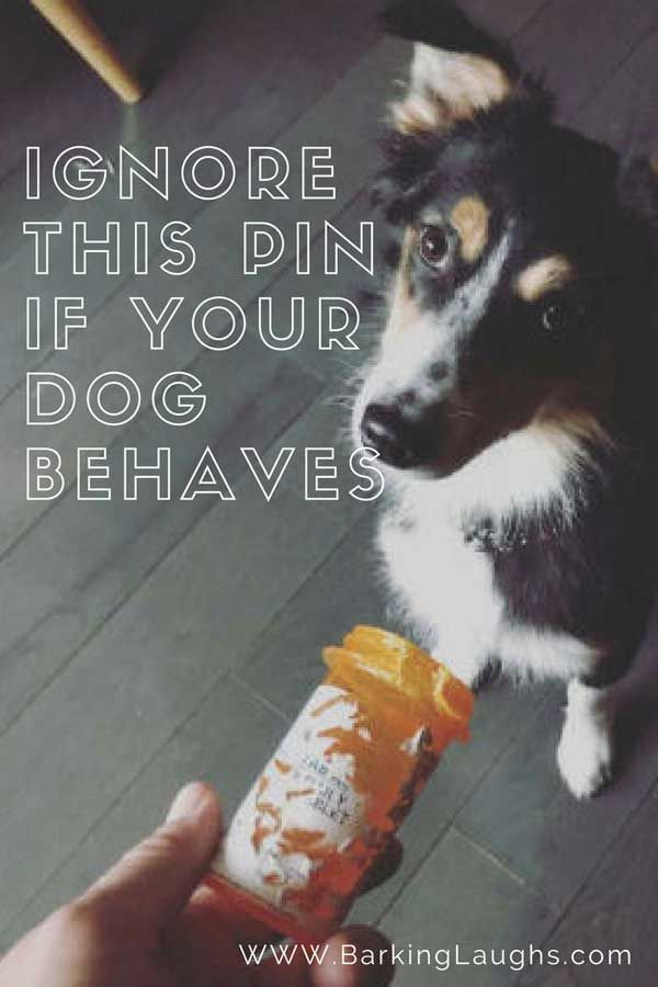 Dogs of Destruction Dog chews a prescription bottle barkinglaughs humor dogs