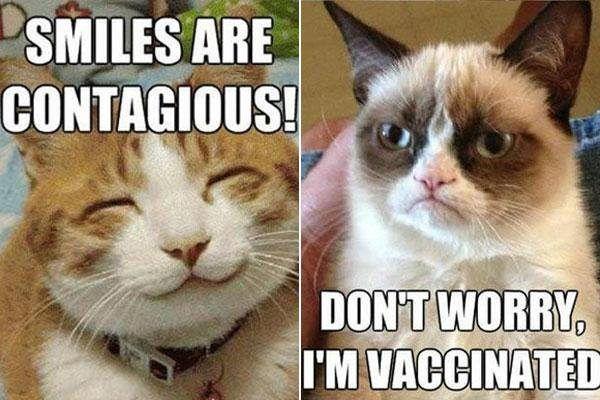9 Best Grumpy Cat Memes 5