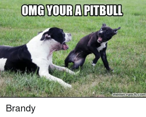 Memes Pitbull and Brandy OMG YOUR A PITBULL meme crunch Brandy