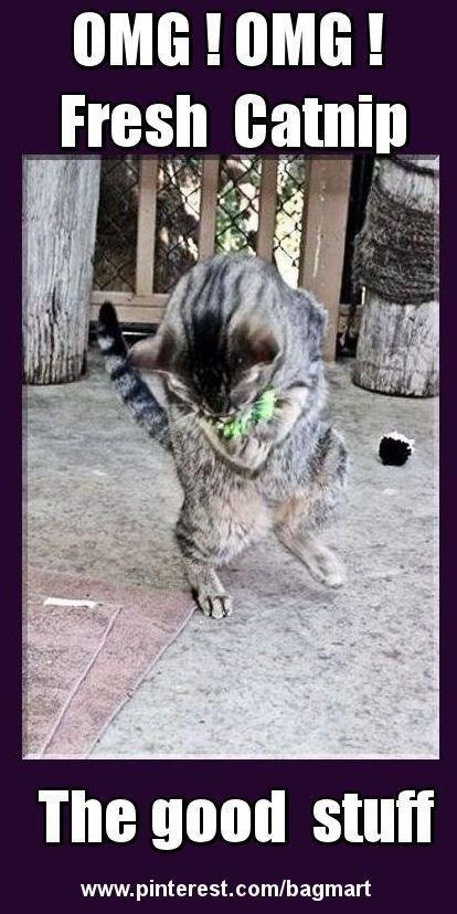 Funny cats FuhRQxJg