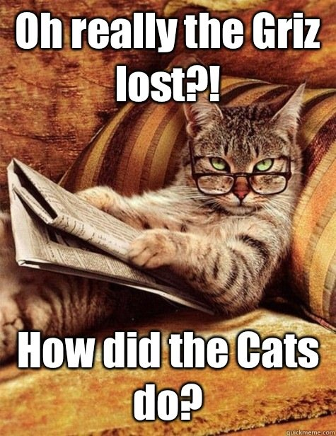 Grasp the Best Of Funny Cat Griz Pictures