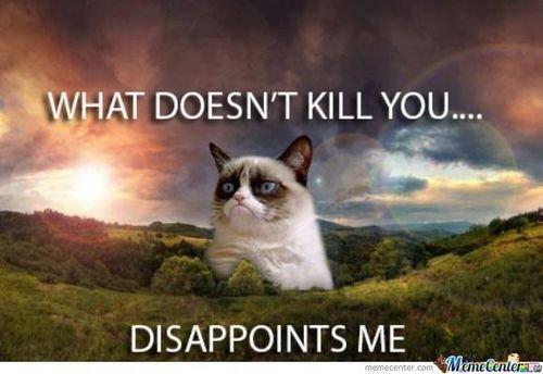 funny cat and grumpy cat image
