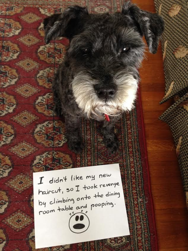 The 40 Funniest Times We ve Shamed Our Dogs Social Media