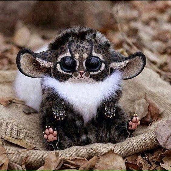 Madagascar Southeast Africa Monkey