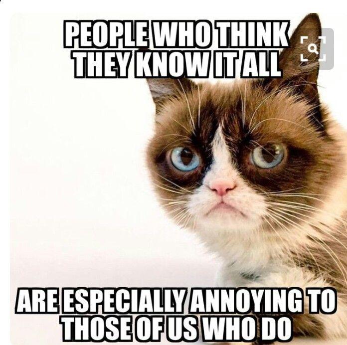 Grumpy Grumpy Funny Grumpy Cats